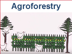 RUVIVAL Publication Series Volume 1 - Link to Agroforestry