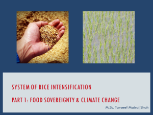System of Rice Intensification Part 1