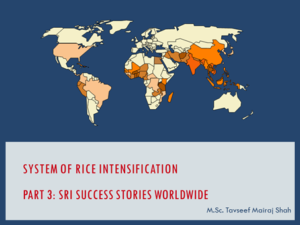 System of Rice Intensification Part 3