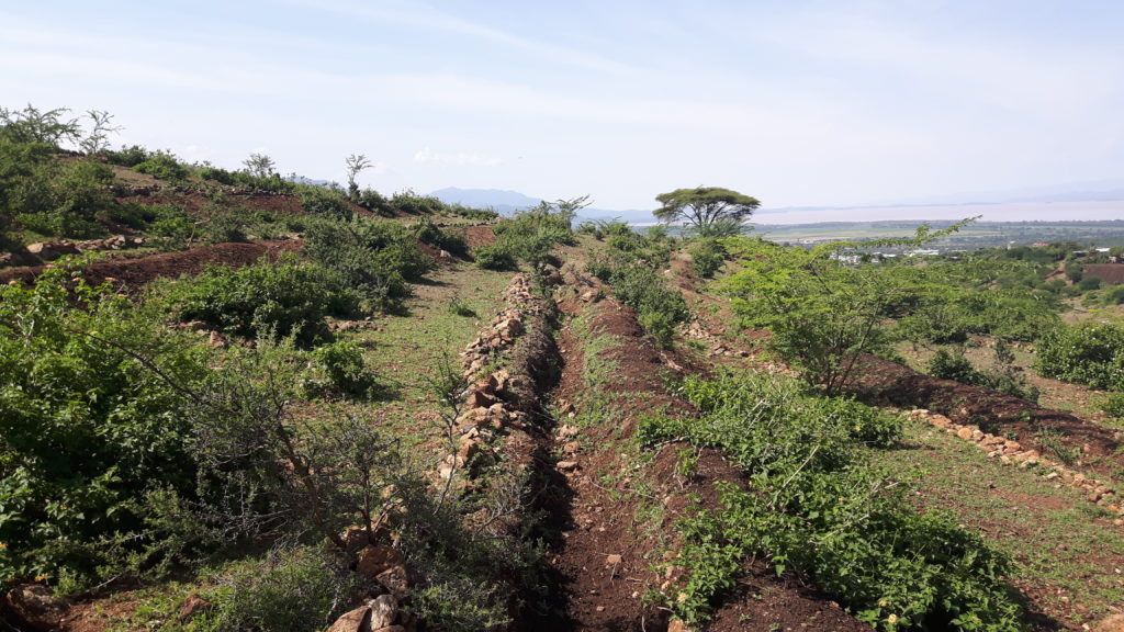 Trenches Slope Farming Project Arba Minch Ethiopia