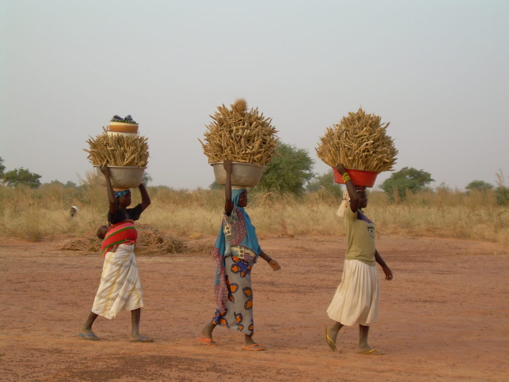newTree: Local women carrying the harvest