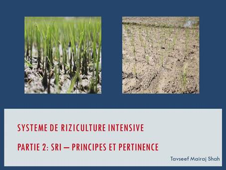System of Rice Intensification Part 2